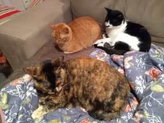 Os três gatos se aquecendo no inverno.