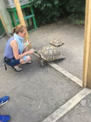 I would never guess that I could fall in love with a tortoise but they are as friendly as dogs!