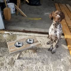 Timber with one of our scrap dog feeders