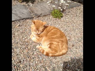 Munchkin lapping up on the sun!