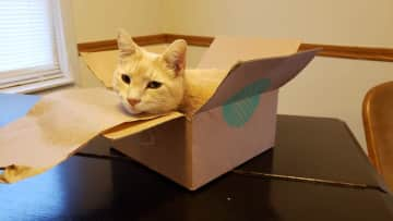 """This is Holmes, one of our kitties. He says """"If it fits I sits""""."""