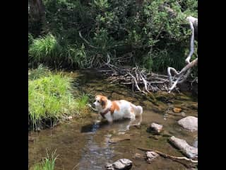 Loves to hike and splash! Plus her coat repels dirt so she is easy maintenance. Weekly brushing is all she needs.