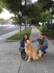 Lots of love and walks for Finn the Golden Retriever.