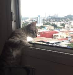 Monchi at the window
