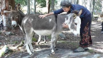 Jasmin checking on the donkeys