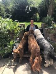 Near York. UK. Dog sitting