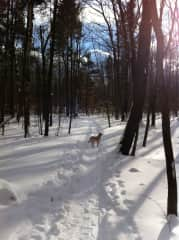 Snowshoeing Near Home