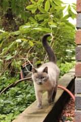 Fafitta on the prowl