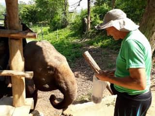 ARIEL IN ELEPHANT SANCTUARY IN THAILAND