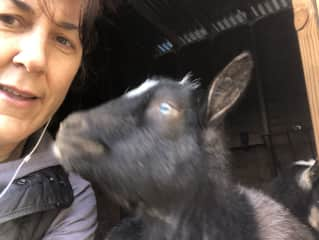 Taking care of goats in WA
