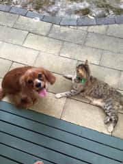 My son's dog Louie and our cat, Pablo