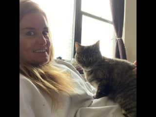 Cat sitting in New York.