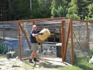 Farmer Dave on a housesit with 40 farm animals in the Santa Cruz mountains.