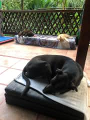 Dec '20-Jan '21 Housesit in the jungles of Costa Rica. 1 dog, 4 cats.