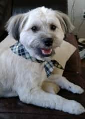 Benji...what a cutie!
