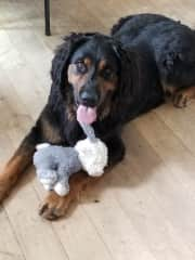 Susan's son's dog Daisy with her new toy