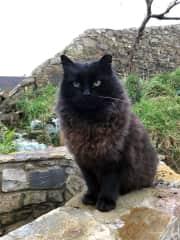 Sweet Baggy in his lovely Irish garden