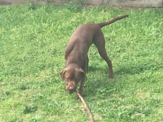 I will eat the stick but not return the stick.