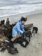 Dunedin NZ Apr-Jun 2018: 2 dogs, 2 donkeys, 8 chickens