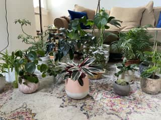 My houseplant family photo. I'll take all the plants please!