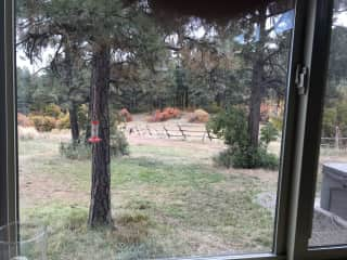 View from kitchen window in the fall