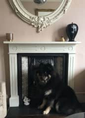 Balthazar in our sitting room
