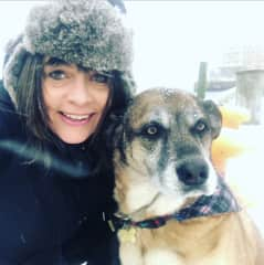 Terri dogsitting Belgian Shepherd, Wally, snowstorm in Halifax, Nova Scotia, Canada (January 2019)