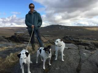 Devon Dogs