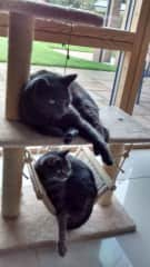 Our 'regular clients' Smokey Robinson & Martha - we so look forward to spending time with these 2 kitties