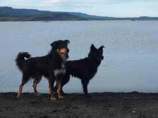 Bruno and Kolla