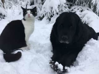 Milo + Bella