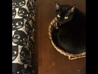 Luna matching the decor.