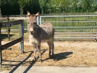 Donkeys make a lot of noise when hungry!