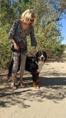 With Freddy, a one-year-old Bernese mountain dog