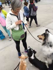 Callie and Frances at Napa Humane Walk for the Animals