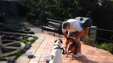 Jim preparing dogs for their walk