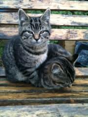 Max and Milo