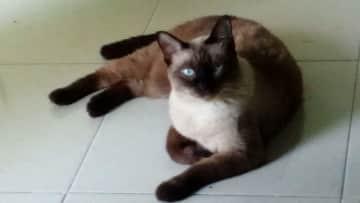 My Darling Rosie in Koh Samui