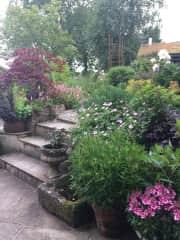 Garden late summer