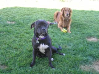 The redhead is my Chelsey who died of cancer in 2010. The tiny pit bull was a rescue I had for 11 weeks while training her to be a proper house dog. I found her a fabulous forever family :)