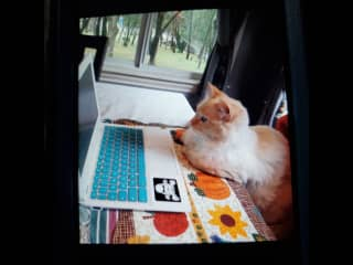 Our family kitty. She loves computer work. Ha,ha
