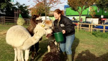 with Tom, Ben, & Jerry (our alpacas), & Snowdrop (one of our Shetlands)