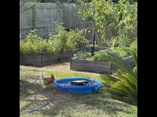 Pool time by the garden