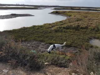 Buster on the bird reserve