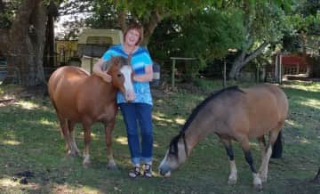 We looked after 15 Welsh ponies and 2 old dogs in the Dandenong Ranges in Victoria. Great fun