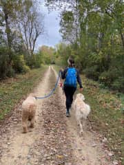Walking dogs - one of my favorite past times!