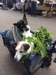 Two puppies who visited my market stall.