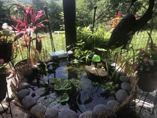 Goldfish pond!