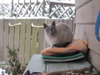 Augie, Bruc Aikenhead's cat