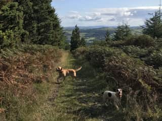 Poppy and Cocoa frolicking in the nearby mountains.